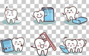 Human Tooth Dental Calculus Dentistry Deciduous Teeth PNG