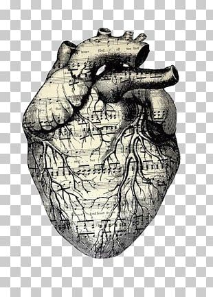 Drawing Heart Musical Theatre PNG