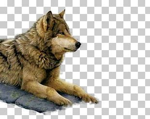 Painting Art Museum Gray Wolf Paint By Number PNG