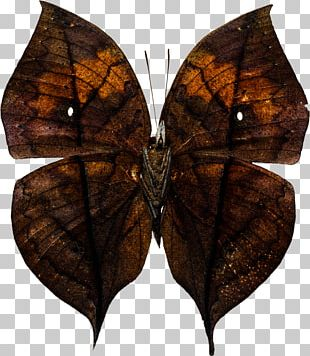 Brush-footed Butterflies Butterfly Moth Stock Photography PNG