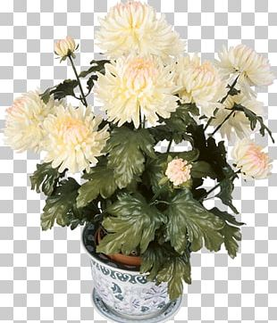 Groveland Daytona Beach Kuhn Flowers Chrysanthemum PNG