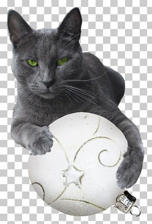 Black Cat Computer Icons Kitten PNG