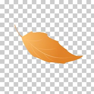 Leaf Portable Network Graphics Autumn Leaves JPEG File Format PNG