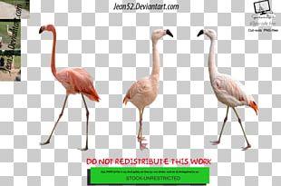 Flamingos Bird Animal PNG
