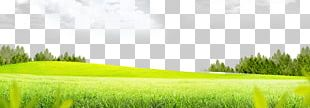 Lawn Grass Meadow PNG