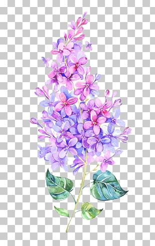Pink Flower Purple Color PNG
