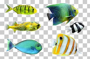 Tropical Fish Desktop Photography PNG