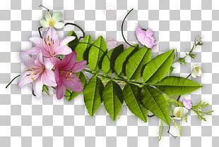 LiveInternet Floral Design PNG