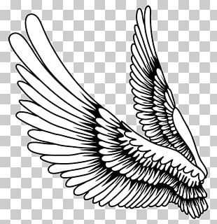 Drawing Bird Feather PNG