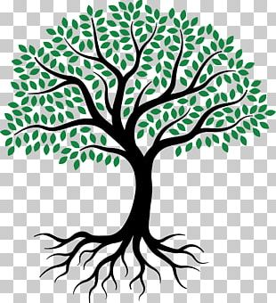 Drawing Root Tree Sketch PNG