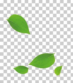 Leaf Bamboo PNG