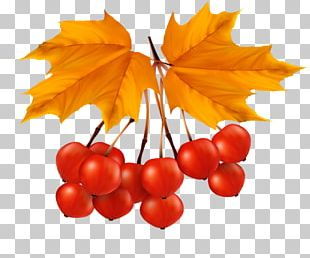 Leaf Portable Network Graphics Autumn Leaves PNG