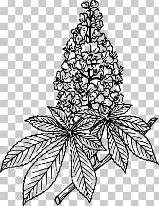 Lilac Flower Drawing PNG