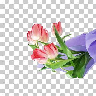 Flower Tulip Floral Design HVGA PNG