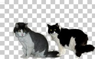 Manx Cat Whiskers Norwegian Forest Cat Domestic Short-haired Cat Dog Breed PNG