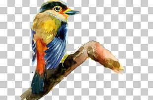 Bird Drawing Painting PNG