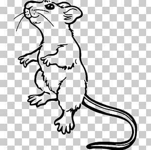 Brown Rat Mouse Coloring Book Laboratory Rat Drawing PNG