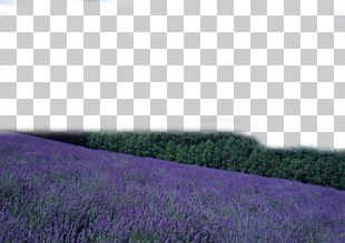 Purple PNG