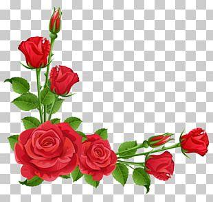 Flower Garden Perennial Plant Pixabay PNG
