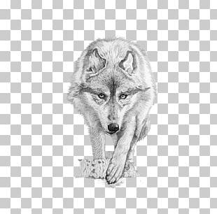 Gray Wolf Coyote Drawing PNG