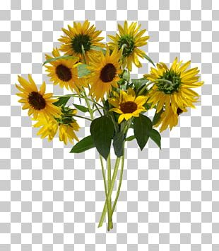 Common Sunflower Flower Bouquet Cut Flowers Floral Design PNG