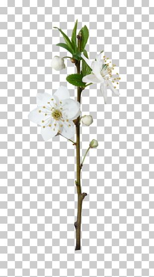 Flowering Plant Blossom Plant Stem Tree PNG