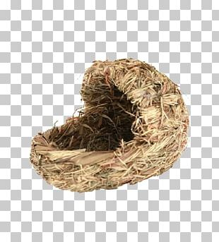 Bird Nest Animal Google S PNG