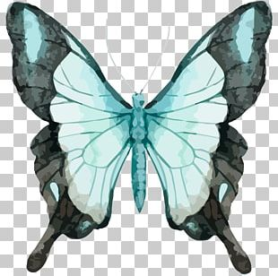 Butterfly Watercolor Painting Graphics Stock Photography PNG