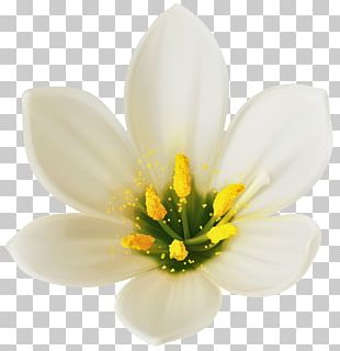 Flower Bouquet White PNG