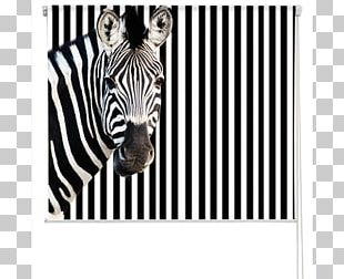 Printing Zebra Business Photograph Poster PNG