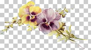 Pansy Flower Design PNG