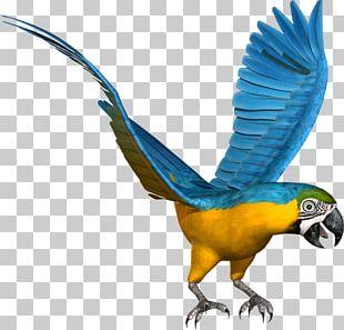 Budgerigar Macaw Lovebird Parrot PNG