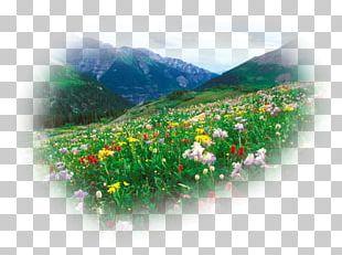 Flower Desktop Floral Design Colorado Music PNG