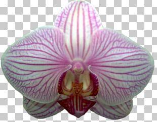 Tyre Hotel Moth Orchids Landscape Landscaping PNG