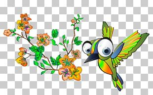Feather Illustration Flora Fauna PNG