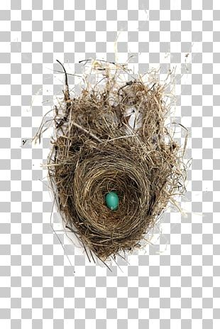 Edible Birds Nest Edible Birds Nest Bird Nest Egg PNG