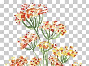 Floral Design Watercolour Flowers Watercolor Painting PNG