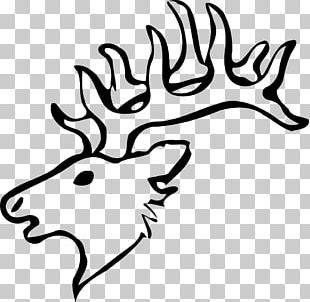 Elk White-tailed Deer Moose Red Deer PNG