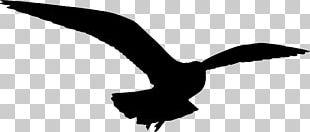 Gulls Bird Silhouette PNG