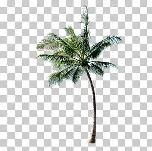 Tree Beach PNG