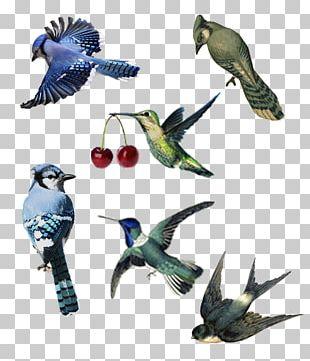 Parrot Bird Parakeet Macaw Beak PNG