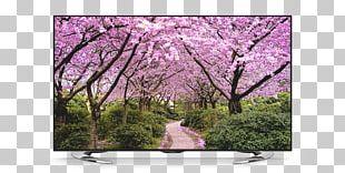 Desktop Season Spring Cherry Blossom Autumn PNG