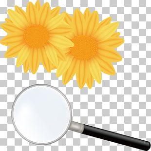 Flower Shutterstock PNG