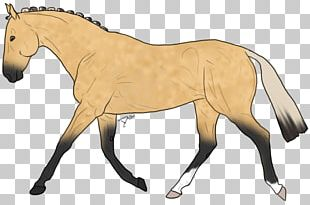 Mule Foal Stallion Mare Colt PNG