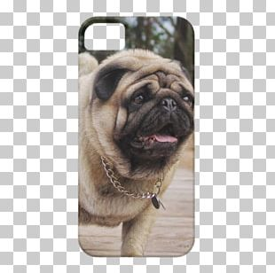 Pug IPhone 5s French Bulldog IPhone 5c PNG