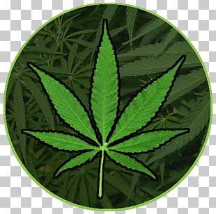 Cannabis Smoking Medical Cannabis Dispensary PNG