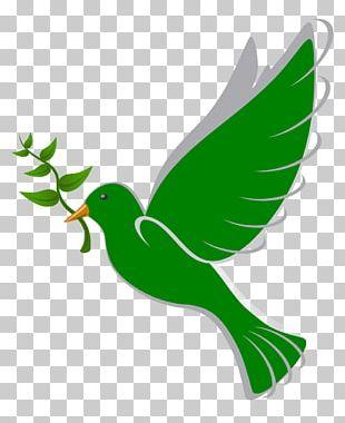 Columbidae Bird Peace Doves As Symbols PNG