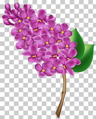 Lilac Flower PNG