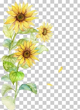 Common Sunflower Poster PNG