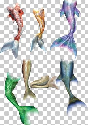 Mermaid Tail Drawing PNG